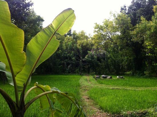 Kumbura Eco Lodge: Beautiful, lush plantings 