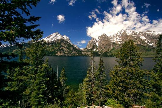 The Pines at Island Park: Teton National Park - Matt White Copyright 2012