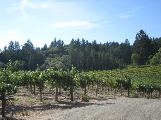 Schweiger Vineyards: Vineyard
