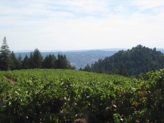 Schweiger Vineyards: Beautiful View
