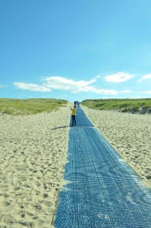 Race Point Beach Walking Path