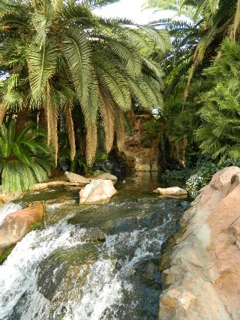 Flamingo Las Vegas Hotel & Casino: gardens