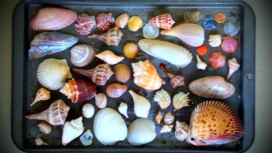 Reel Kind Fishing and Tours: These are the shells I brought back to Boston with me. It was a tough choice!