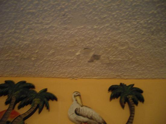 The Summit Condominiums: Mold on ceiling in living room, plaster falling off unit 1201