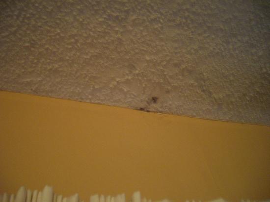 The Summit Condominiums: Mold on living room ceiling unit 1201