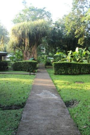 Chachagua Rainforest Eco Lodge: Grounds