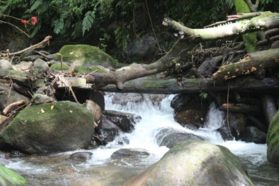 Chachagua Rainforest Eco Lodge: River that runs through the property
