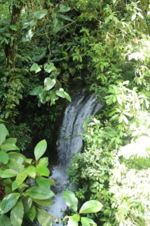 Chachagua Rainforest Eco Lodge: The walk behind the hotel leads to this small but beautiful waterfall