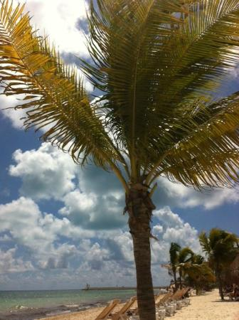 Excellence Playa Mujeres: laying under a palm tree for shade