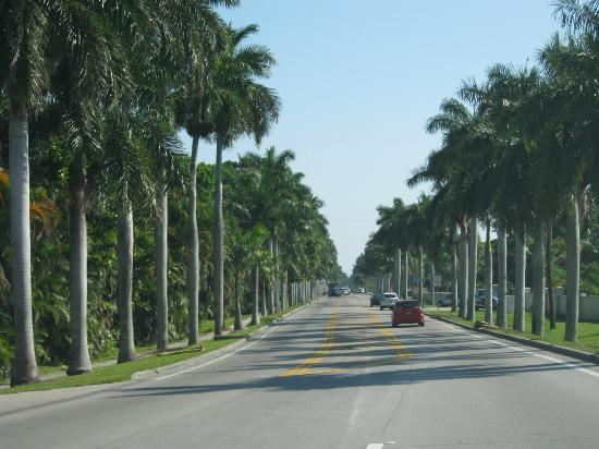 Fort Myers, Φλόριντα: Palm trees line the street for 10 miles
