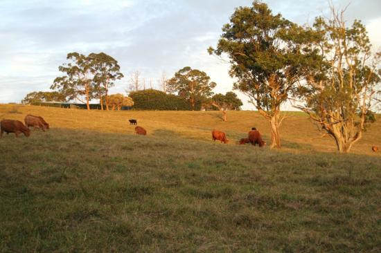 Akoonah Cottages - Byron Bay Hinterland: Adjoining farmland we encountered on our bush walk