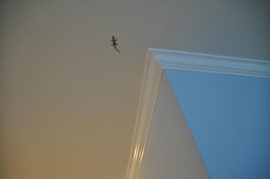 Ibis Bay Beach Resort: Little lizard painted on ceiling