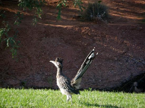 The Inn at Entrada: Our morning and evening visitor...beep beep..