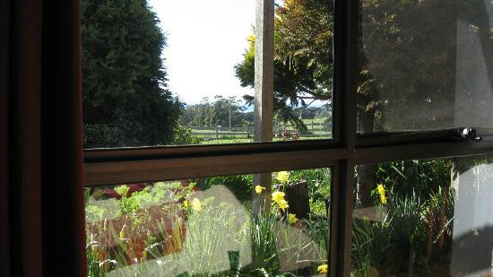 Blueberry B&B: Daffodils from the Blue Room window