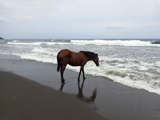 KUPAU Tours Inc.: Wildes Pferd