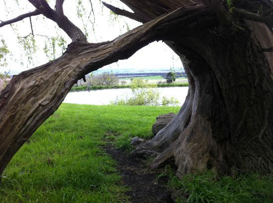"""Tuki Retreat : An """"entrance"""" made by a bending tree beside one of the lakes"""