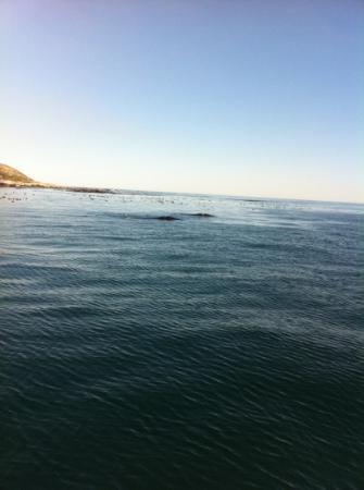 Hermanus Backpackers: whale watching trip!