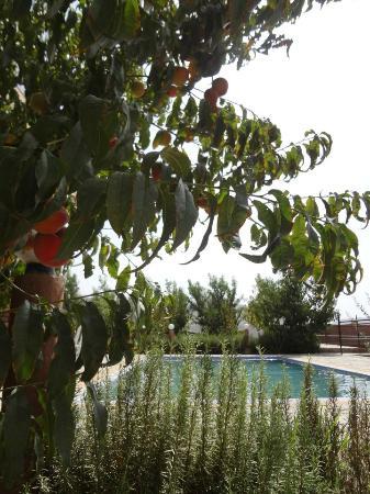 Riad Aslda: the garden and pool