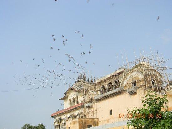 Hotel Yuvraj Kothi Rao