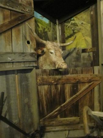 Baker Heritage Museum : Ox display in the pioneer barn exhibit.