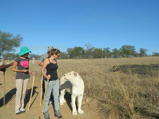 Protea Hotel by Marriott Ranch Resort: Walk with the lions