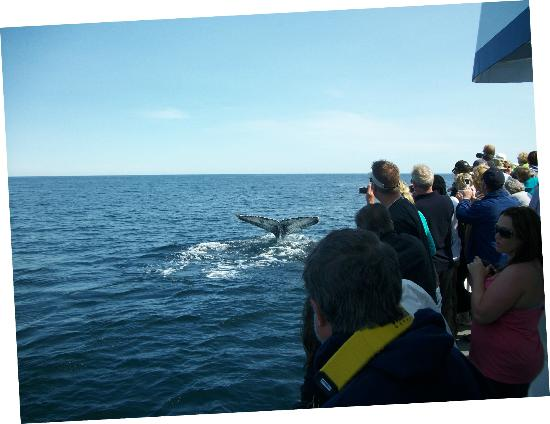 Dolphin Fleet Whale Watch: We saw lots of them!