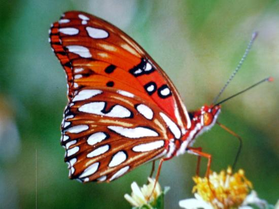 Focus One Fishing Charters: BUTTERFLY  N NATIONAL PARK