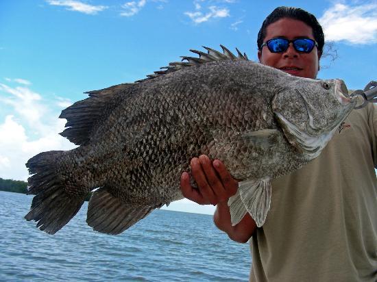 Focus One Fishing Charters: BIG TRIPLE TAIL