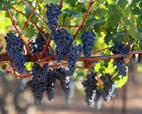 Fairway Suites at Peek n Peak: Near more than 30 Local Wineries