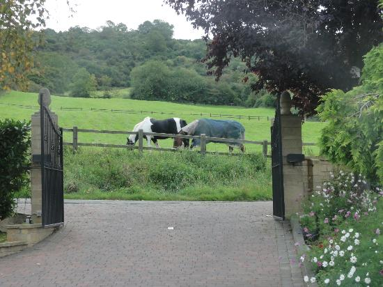 Homelands Bed and Breakfast: View from the front door