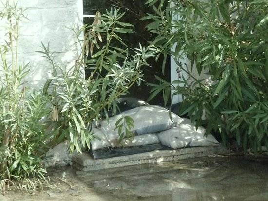 Le Lantana:                                                       sand bags before window