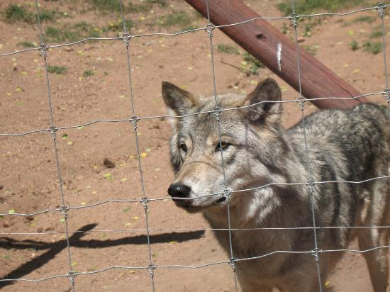 Colorado Wolf and Wildlife Center: Simply gorgeous