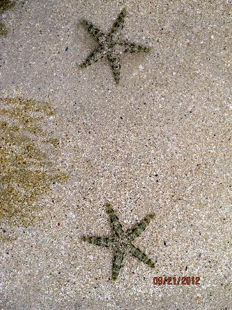 Turtle Island Resort: starfish in the sand