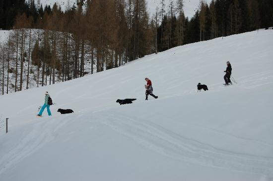 Berghotel Arthurhaus: Wandern mit Hund