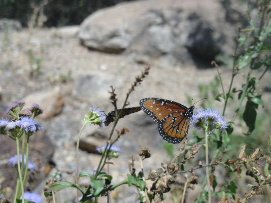 Arizona-Sonora Desert Museum: Butterfly in nature at museum