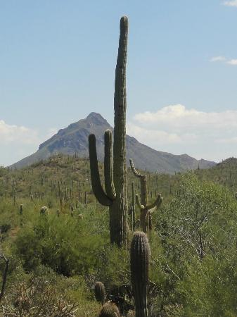 Arizona-Sonora Desert Museum: Beautiful desert at museum