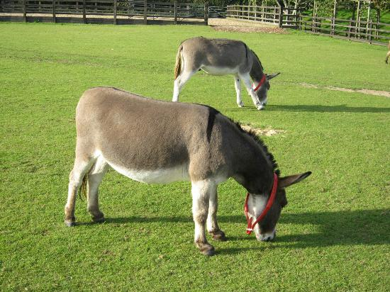 The Donkey Sanctuary: 2 of many