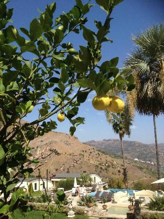 ذا أشبي هوتل: View from the grounds 