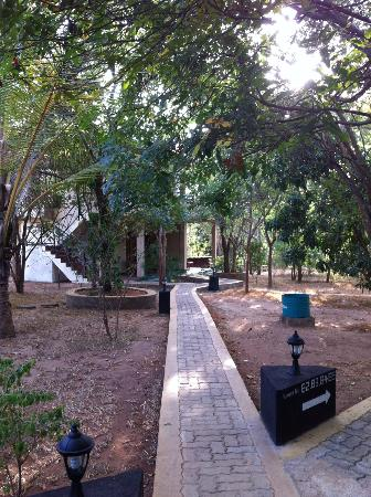 Nice Place Bungalows: Wooded pathway leading to rooms