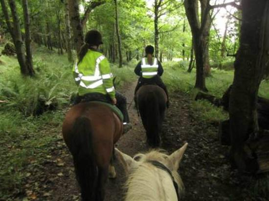 Killarney Riding Stables: Along the trails