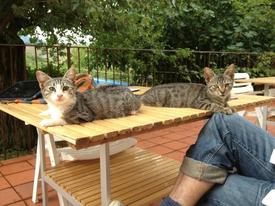 Locanda della Valle Nuova: Die Hauskatzen