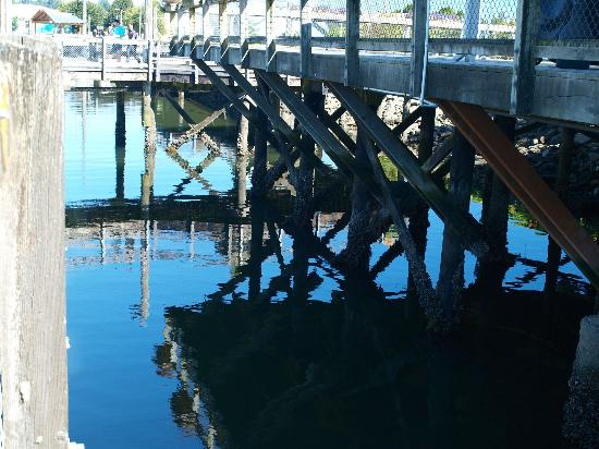 Percival Landing: On a clear day even under the dock is beautiful