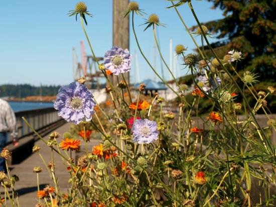 Percival Landing: Just some of the pretty flowers you will encounter
