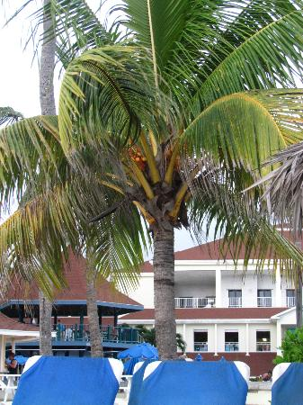 Breezes Resort & Spa Bahamas: Palm tree
