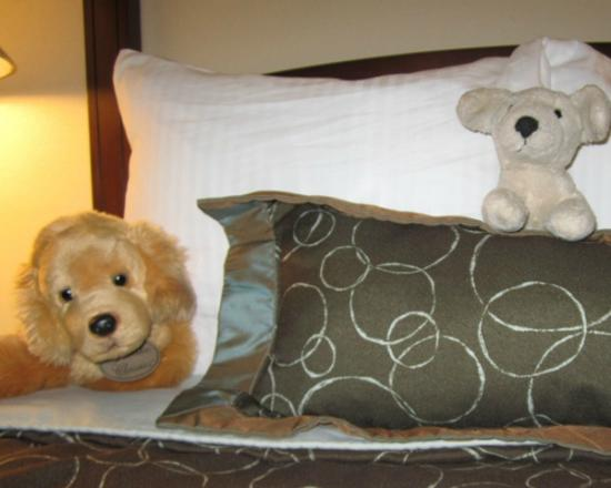 Staybridge Suites Indianapolis - Carmel : Staff was so exceptional! When they made the beds they also tucked in our daughter's puppies.
