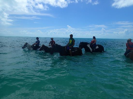 Provo Ponies: Ocean ride