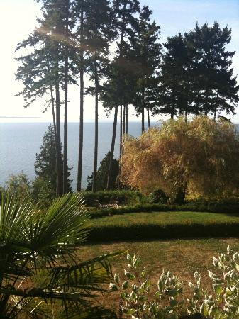 Dancing Firs Bed and Breakfast : The view from the deck