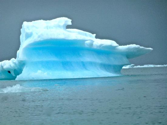 St. Elias Alpine Guides Day Adventures: Iceberg from Columbia Glacier