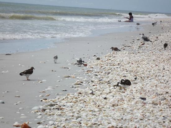 Mitchell's Sandcastles照片