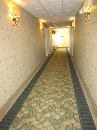Holiday Inn Express Hotel & Suites Wheat Ridge-Denver West: Hallways were well appointed ... clean and nice colors.